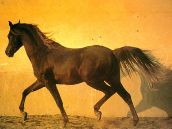 horse41.jpg
